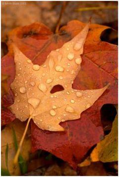 مطالبی جالب درباره اینکه چرا برگ درختان در پاییز زرد و قرمز میشود..؟!