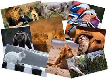 مجموعه ۷۰ عکس سه بعدی با کیفیت بالا – گالری عکس