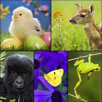 تصاویر بسیار زیبای دنیای حیوانات Really Amazing Animals Wallpapers