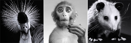 مجموعه پس زمینه های حیوانات -عکس سایز بزرگ